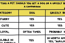 """screenshot of hand-drawn chart titled """"Adopting a Pet: Should You Get A Dog Or A Grizzly Bear?"""""""