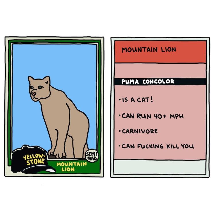 hand-drawn yellowstone trading card: mountain lion