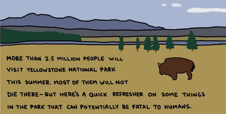 drawing of bison and text: more than 2.5 million people will visit Yellowstone National Park this summer. Most of them will not die there—but here's a quick refresher on some things in the park that can potentially be fatal to humans.