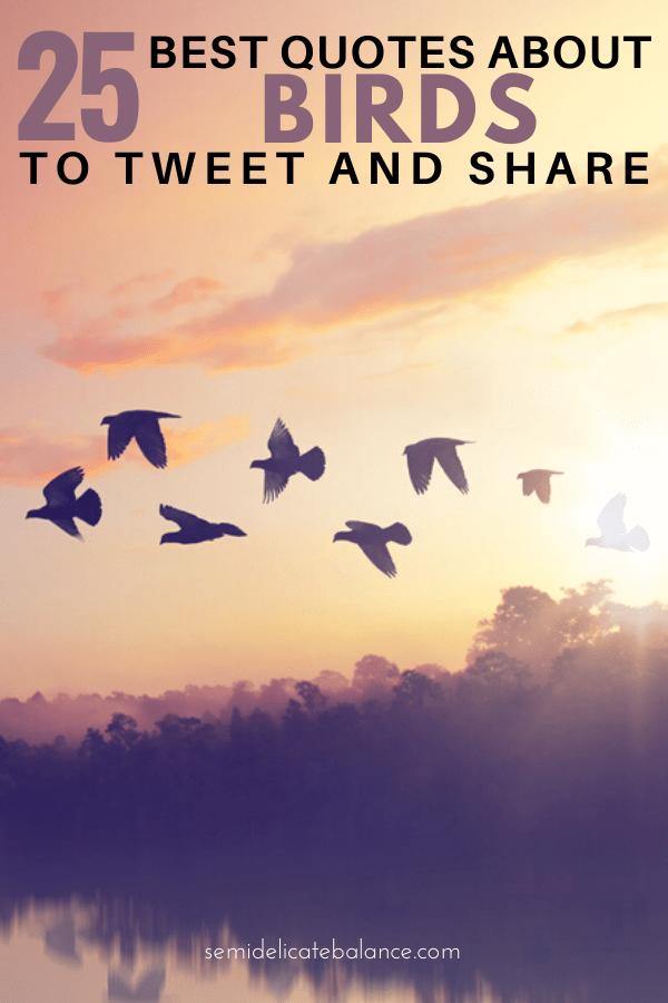 Quote About Flying : quote, about, flying, Quotes, About, Birds, Tweet, Delight