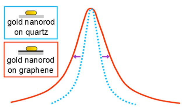 The plasmon resonance of gold nanorods on graphene is broadened compared with gold nanorods on quartz, according to a new study by Rice University scientists. The additional peak width was attributed to excited electron transfer between gold nanorods and graphene. (Credit: Anneli Hoggard/Rice University)