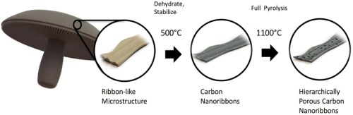 Schematic illustration of the process of obtaining Portobello mushroom skin-derived, hierarchically porous carbon nanoribbons used as free-standing, binder-free, current collector-free carbon anodes. (Source: Lauro Zavala/UC Riverside)