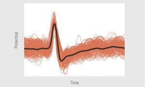 """The type of electrical signal transmitted by neurons (a """"spike""""). The red lines are various other biological signals, the black line is the averaged signal.  (Source: MIPT)"""