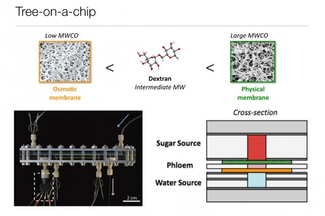 tree-on-a-chip MIT mar28