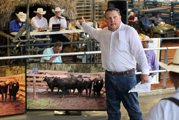 Richard Hood, of American Marketing Services, hustles as he handles the high-energy auction floor Oct. 10 during the Cattle Country Replacement Female Sale at Fred Smith Rodeo Arena in Brighton.
