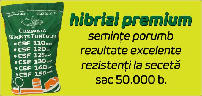 seminte porumb premium fundulea, compania seminte fundulea