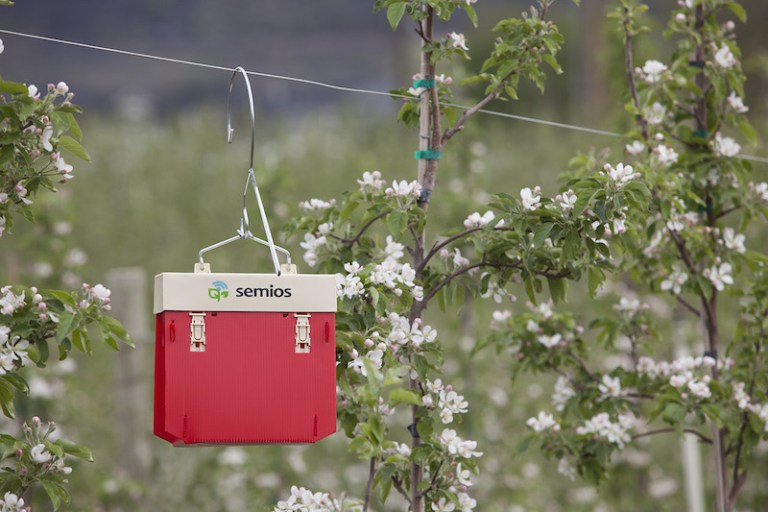 Trap hanging in an apple orchard during bloom