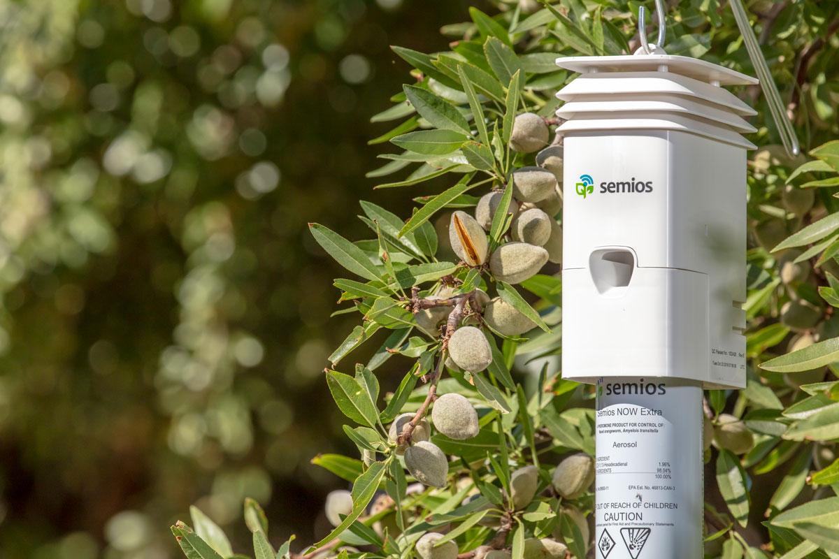A Semios Pheromone Aerosol Dispenser hanging in an almond orchard