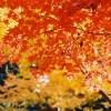 松川渓谷で紅葉狩り!時期とアクセス