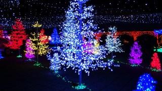 ひらかたパーク「光の遊園地」の開催時期とアクセス