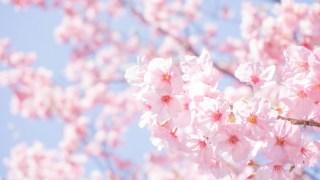 茨木市民さくらまつり!元茨木川緑地の桜通りでお花見