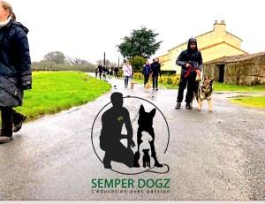 Semper-Dogz---éducateur-canin-nantes-cholet----berger-allemand-ancien-type
