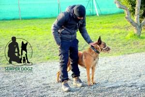 Semper-Dogz---éducateur-canin-nantes-cholet---créer-le-lien-avec-un-chien-agressif