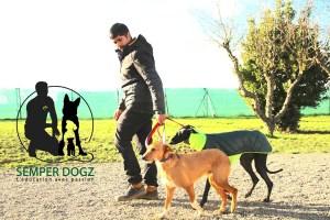 Semper-Dogz---éducateur-canin-nantes-cholet---double-laisse