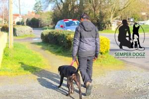 Semper-Dogz---éducateur-canin-nantes-cholet---une-confiance-aveugle