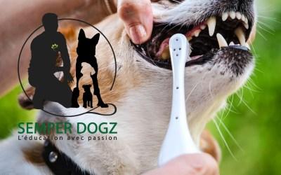 Entretenir les dents
