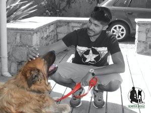Semper-Dogz-educateur-canin-nantes-cholet---le-chien-communique-avec-l'âme
