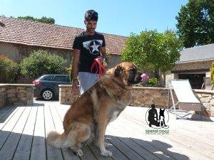 Semper-Dogz-educateur-canin-nantes-cholet---signaux-d'apaisement