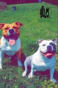 Semper Dogz - educateur canin nantes cholet - chiens catégorisés