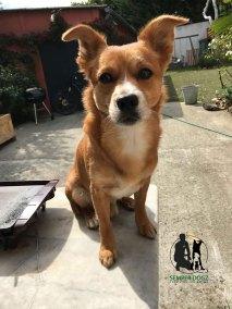 Semper-Dogz-educateur-canin-nantes-cholet-les-chiens-sont-mignons