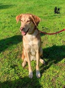Semper-Dogz-éducateur-canin-nantes-cholet-balade-éducative-Mina