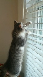 Earns his keep by dusting the blinds.