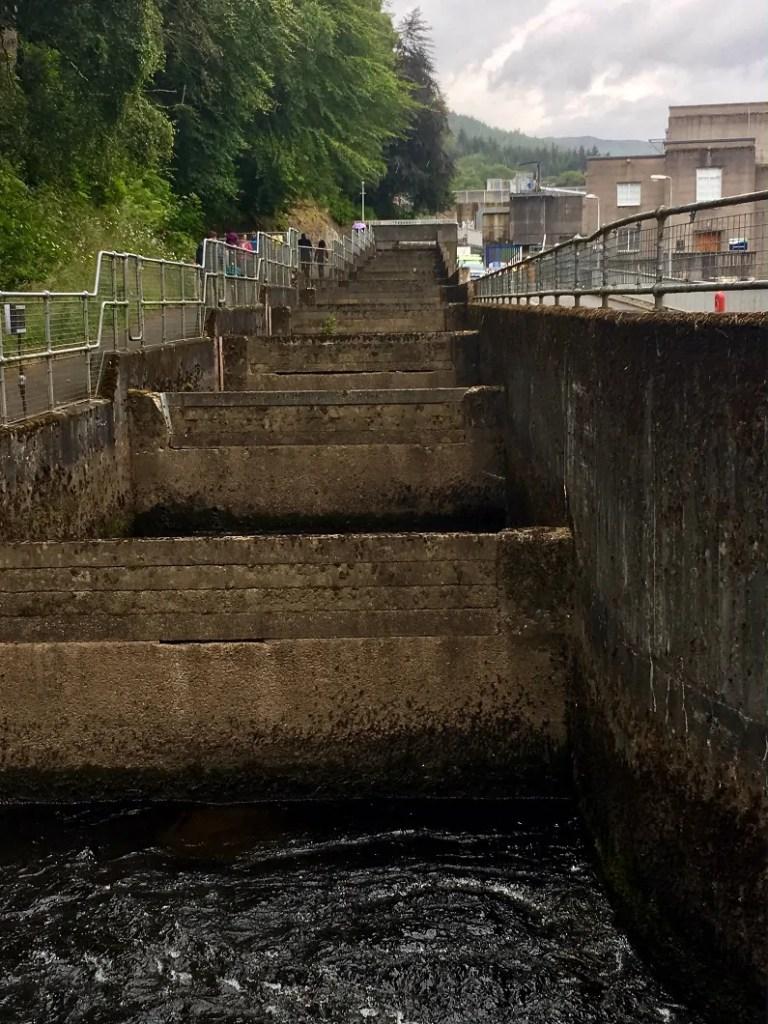 Pitlochry Dam per la gestione dei salmoni in scozia