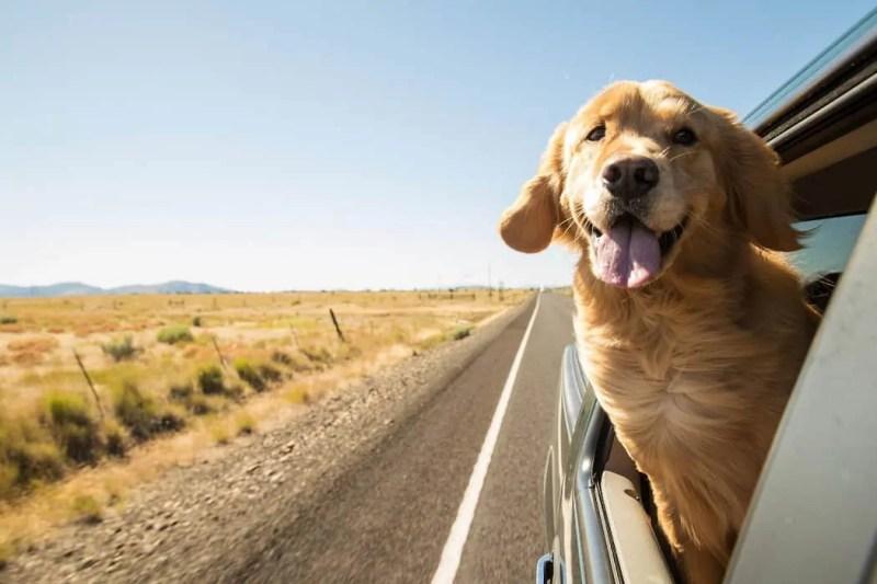 viaggiare con cane