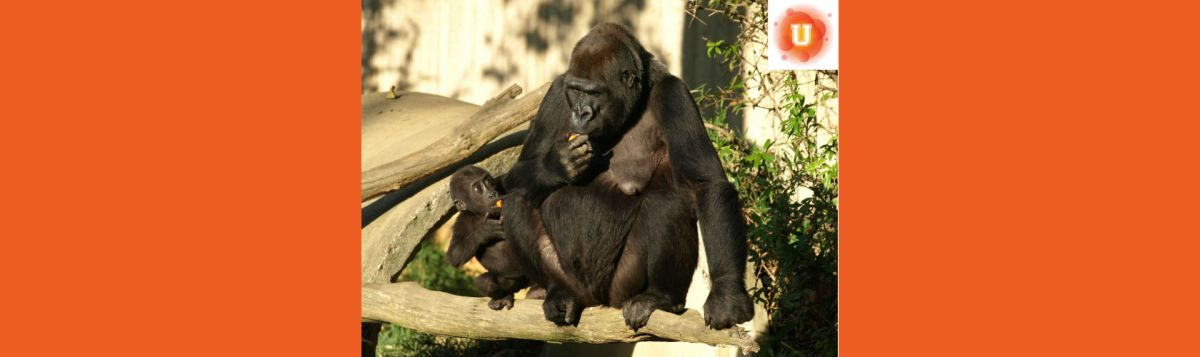 """""""Is It Morally Justifiable to Kill An Endangered Animal If A Human Life Is At Risk?"""" #DoNowULife Photo Credit: US Department of State IIP P"""