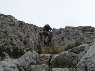 Cavall Bernat (pas difícil)
