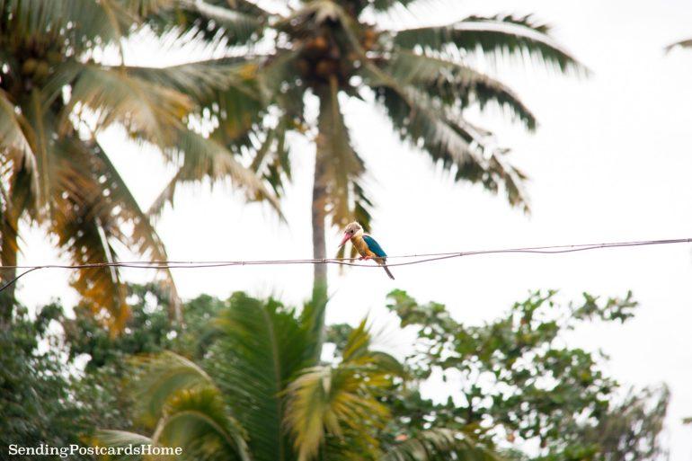 Kerala houseboat Alleppey, Kerala, India - Sending Postcards Home 6
