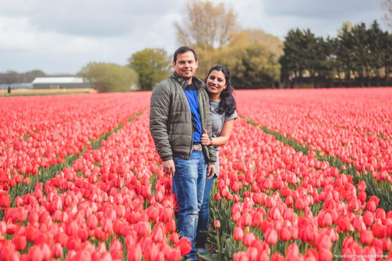 Exploring the tulip fields in Amsterdam, Netherland 5