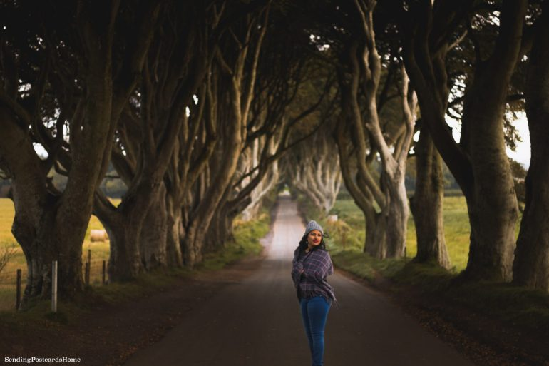 The Drive to Giants Causeway and Beyond; The kings road aka Dark Hedges 4