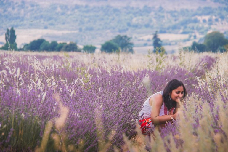 Provence and it's majestic Lavender fields 2