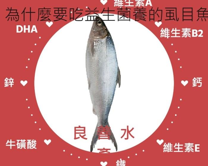 超重量級虱目魚肚-無毒養殖吃益生菌長大的虱目魚的營養-良善水產