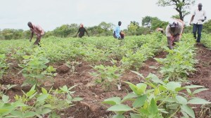SEND-GHANA joins regional CSOs to demand more investment in agriculture