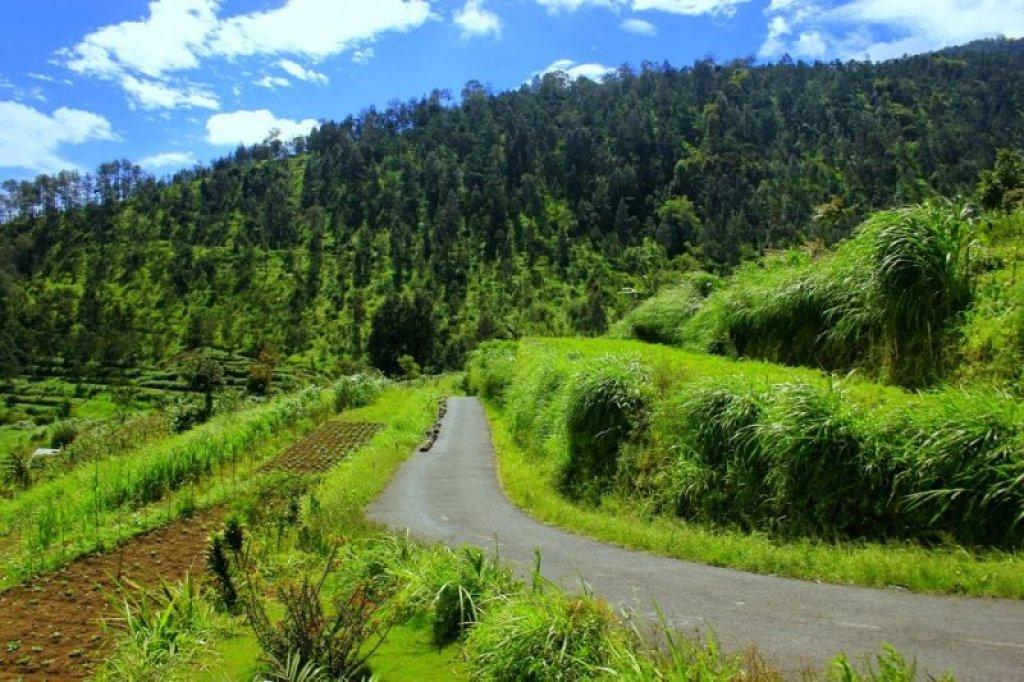 Merasakan Hawa Dingin Pegunungan di Desa Wisata Kopeng