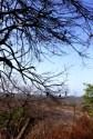 baluran taman nasional kemarau