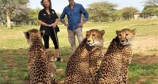 Hannes Jaenicke ist im Einsatz für Geparden