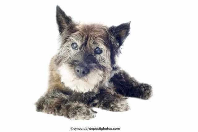 Blinde Hunde - So klappt der Alltag