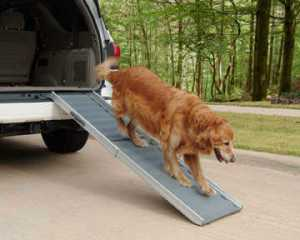 Training a Senior Dog to Use the Ramp or Stairs