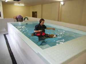 Hydrotherapy, one of the best senior dog treatments