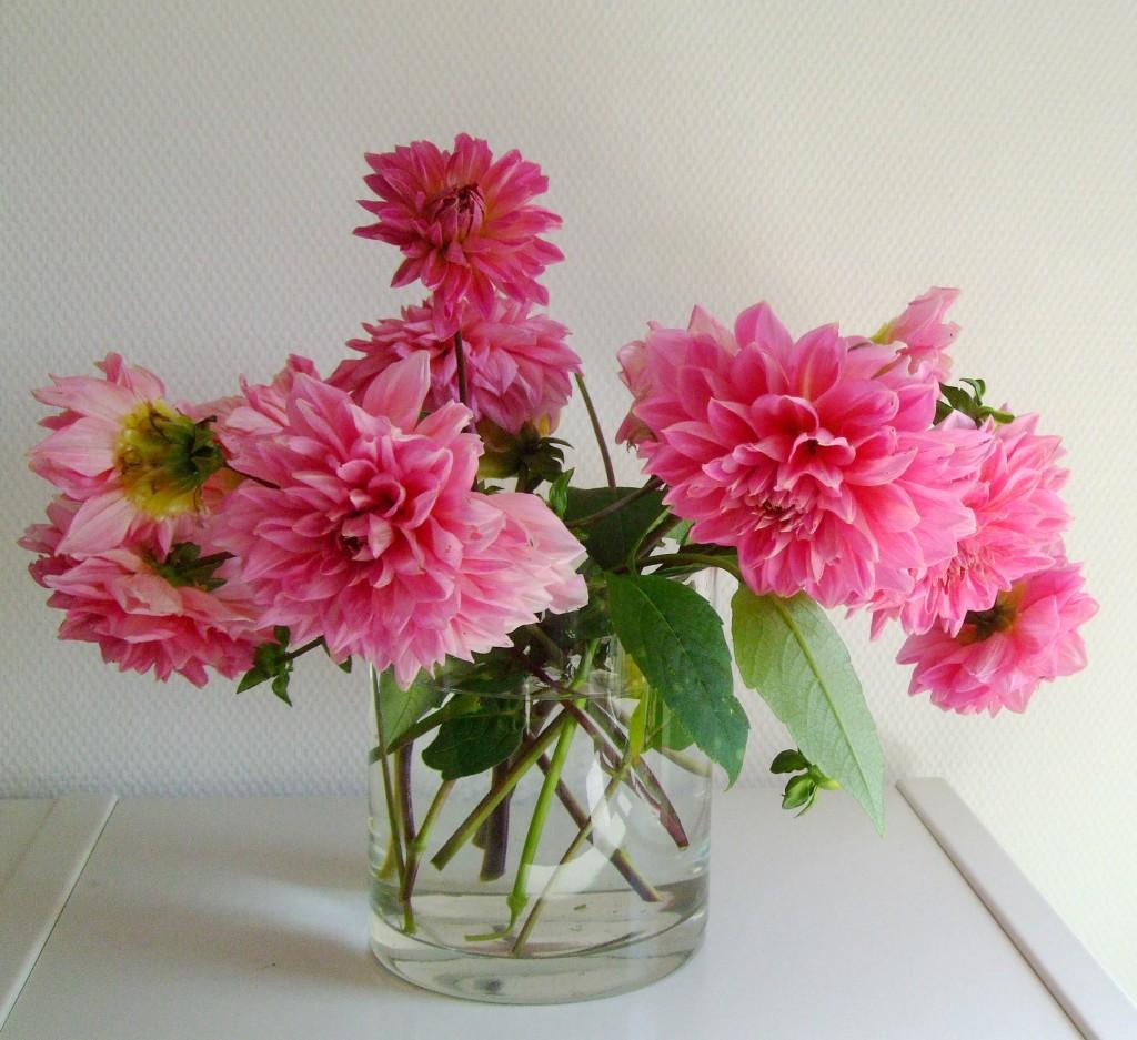 Im September Blumen aus meinem Garten  Seniorenlotse