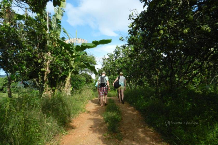 ścieżka w pobliżu rzeki Kwai