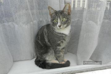 Kot w oknie w Maastricht