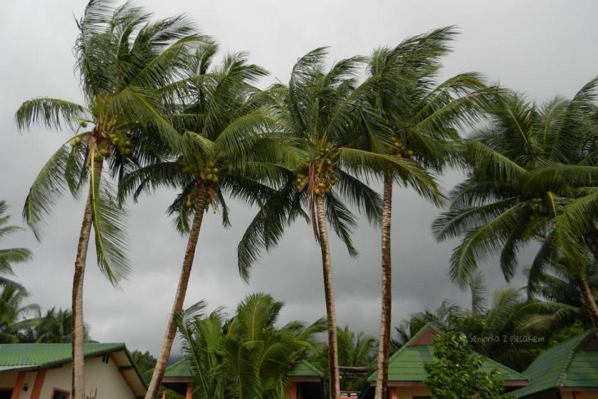 Palmy na Ko Chang