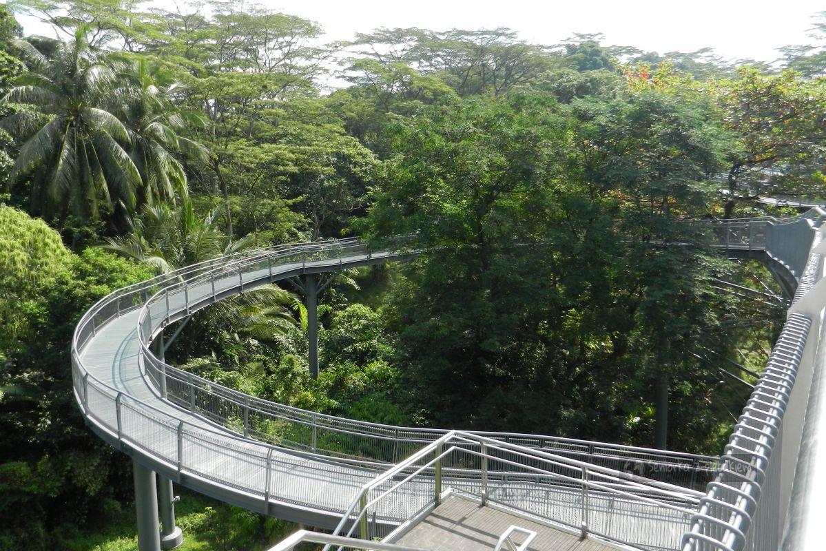 Singapur - spacer wśród koron drzew i wyspa Sentosa