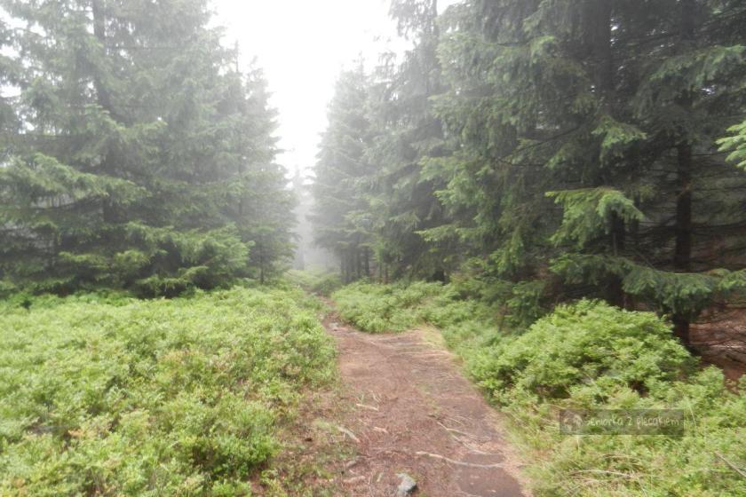 Beskid Śląski we mgle