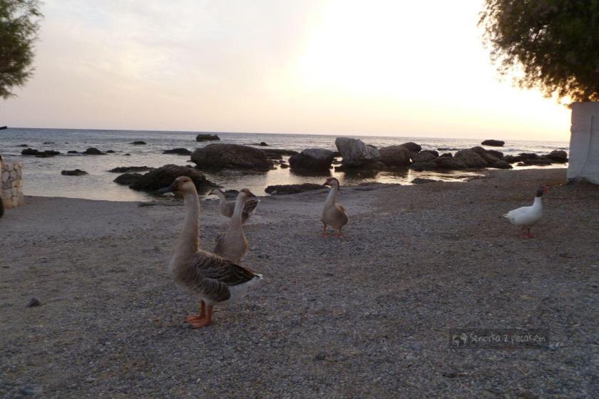 Ptaki w Plakias