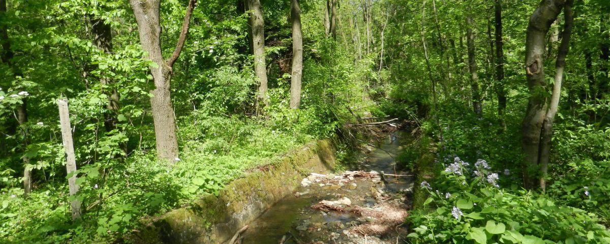 Dolina potoku Wapienica